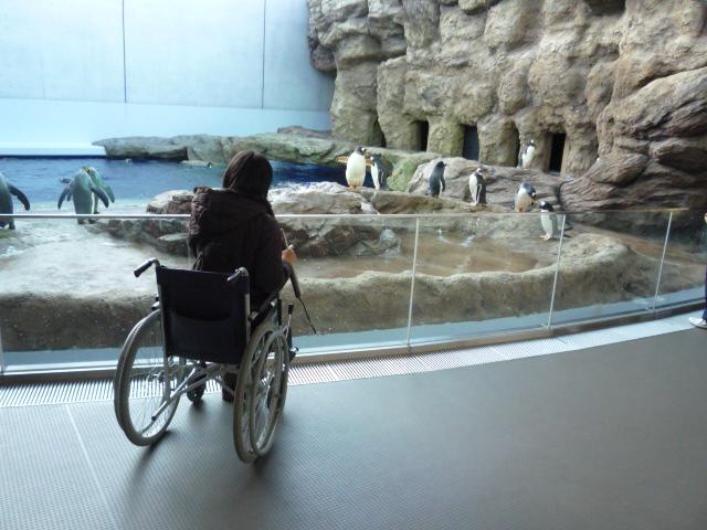 外からペンギンを眺めている画像 クリック・Enterで拡大