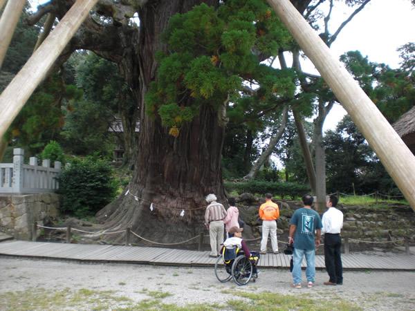 国指定天然記念物の八百杉を眺めた写真です