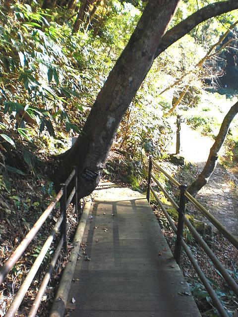 進路が木で左半分、塞がれている画像 クリック・Enterで拡大
